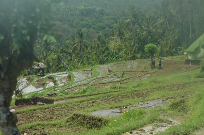 Flooded rice terraces, rural Bali, Indonesia.