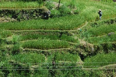 Fields in northern Bali, Indonesia.