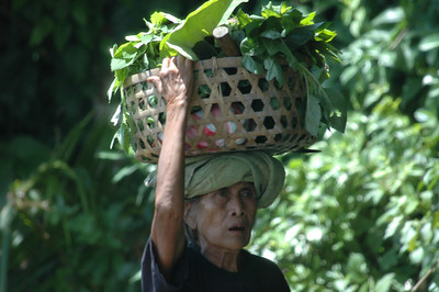 Carrying food, rural Bali, Indonesia.