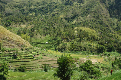 Terraced valley in northern Bali, Indonesia.