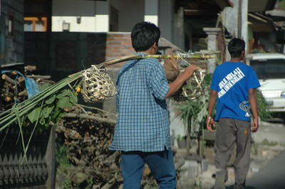 Fowl transport, Bali, Indonesia.