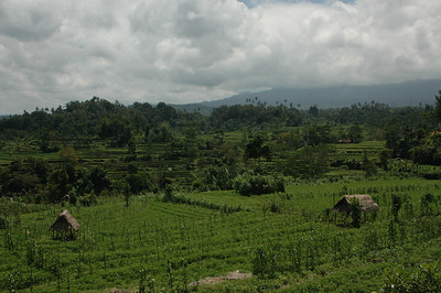 Fields and rice terraces, northern Bali, Indonesia.