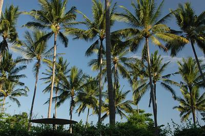 Palm trees, Bali, Indonesia.