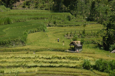 Rural northern Bali, Indonesia.