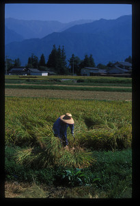 Farmer and field, Nagano prefecture, Japan.