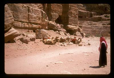 Camel tender, Petra, Jordan.