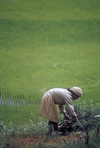Farmer, rural Madagascar