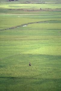 Farming in rural Madagascar.