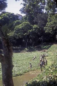 Lake Anosy, Antananarivo, capital of Madagascar.