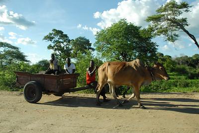 Bullock cart, rural Malawi.