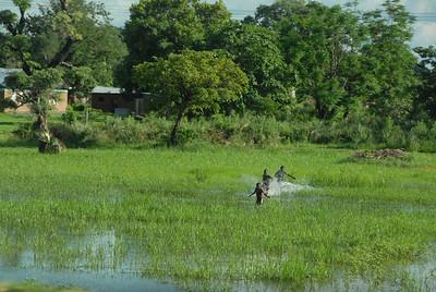 Field after rain, rural Malawi.