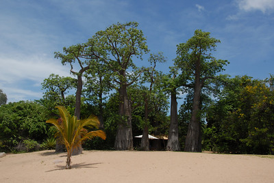 Beach and baobabs at Kaya Mawa resort, Likoma Island, Malawi.