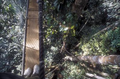 Arboreal walk, Malaysian Borneo.
