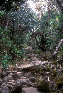 Climbing Mt. Kinabalu, Malaysian Borneo.