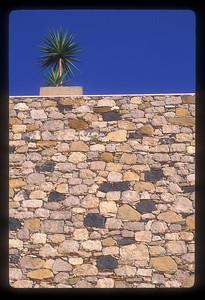 Plant on a wall, Valetta, Malta.
