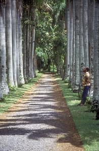 Path in Sir Seewoosagur Ramgoolam Botanic Gardens, Mauritius.