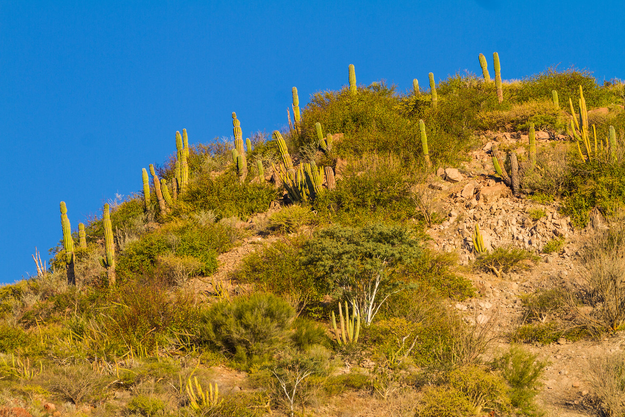 View of cactus growing on hill - Mexico