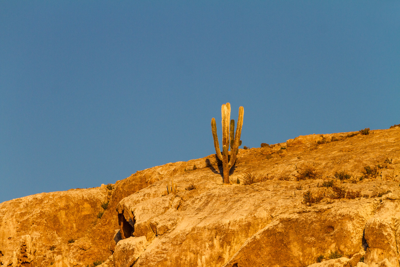 View of cactus growing on rocks - Mexico