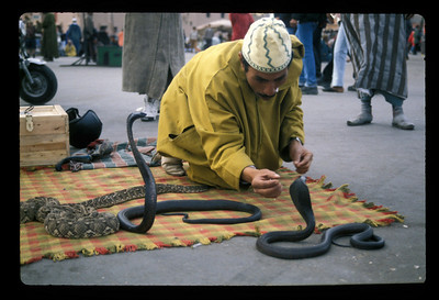 Snake charmer, Plaza Djemma el Fna, Marrakech, Morocco.