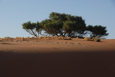 Wind over sand and vegetation at Sossusvlei, Namib-Naukluft Park, Namibia.