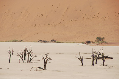 Former trees at Dead Vlei, Namib-Naukluft National Park, Namibia.
