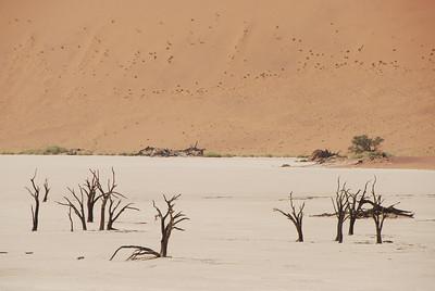 Former trees at Dead Vlei, Namib-Naukluft National Park, Namibia.
