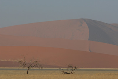 Sand dunes ad trees, Namib-Naukluft National Park, Namibia.