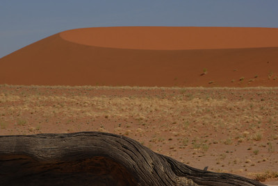 Dead wood and dune at Dead Vlei, Namibia.