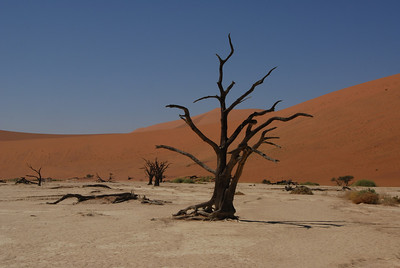 Former trees, Dead Vlei, Namibia.