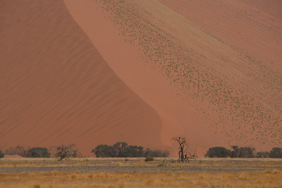 Sand dune and tree, Namibia.