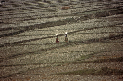Women cross a field near Royal Chitwan National Park, southern Nepal.