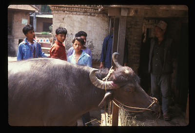 On the road to Bhaktapur, Nepal.