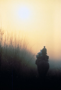 Elephant safari at sunrise, Royal Chitwan National Park, Nepal.
