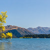 Wanaka Tree Panorama
