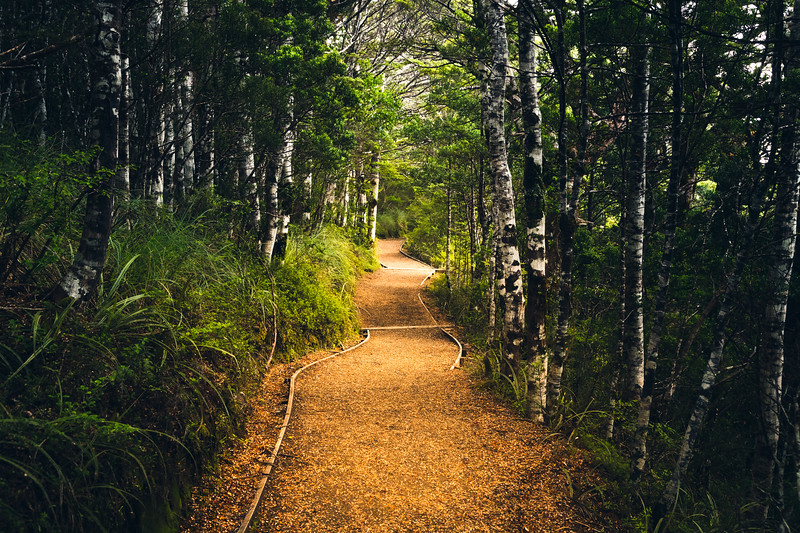 New Zealand Forest Trail