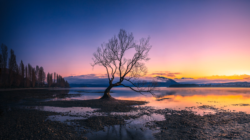 Wanaka Tree at Sunrise