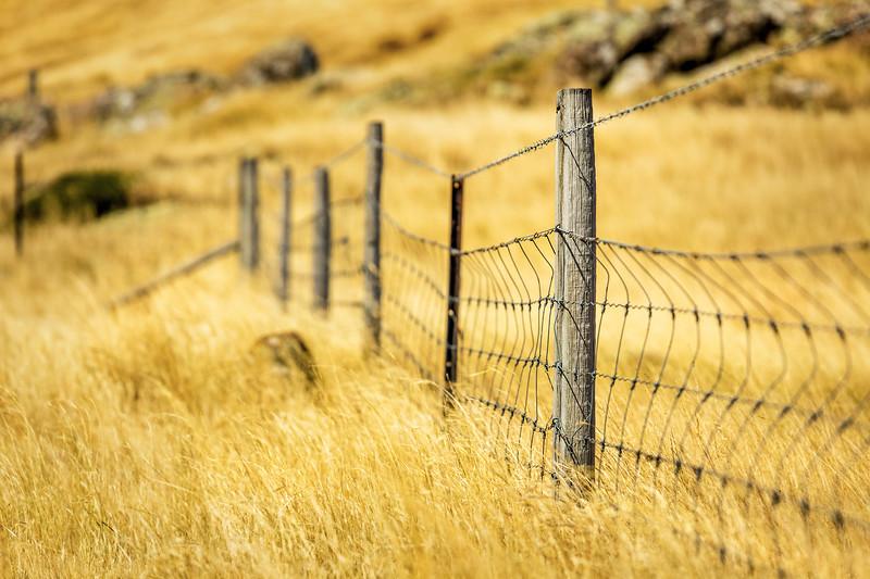 New Zealand Fence