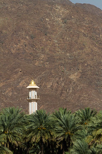 Date palm trees with minaret in background - Oman