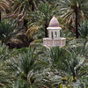 Minaret surrounded by date palm trees - Oman