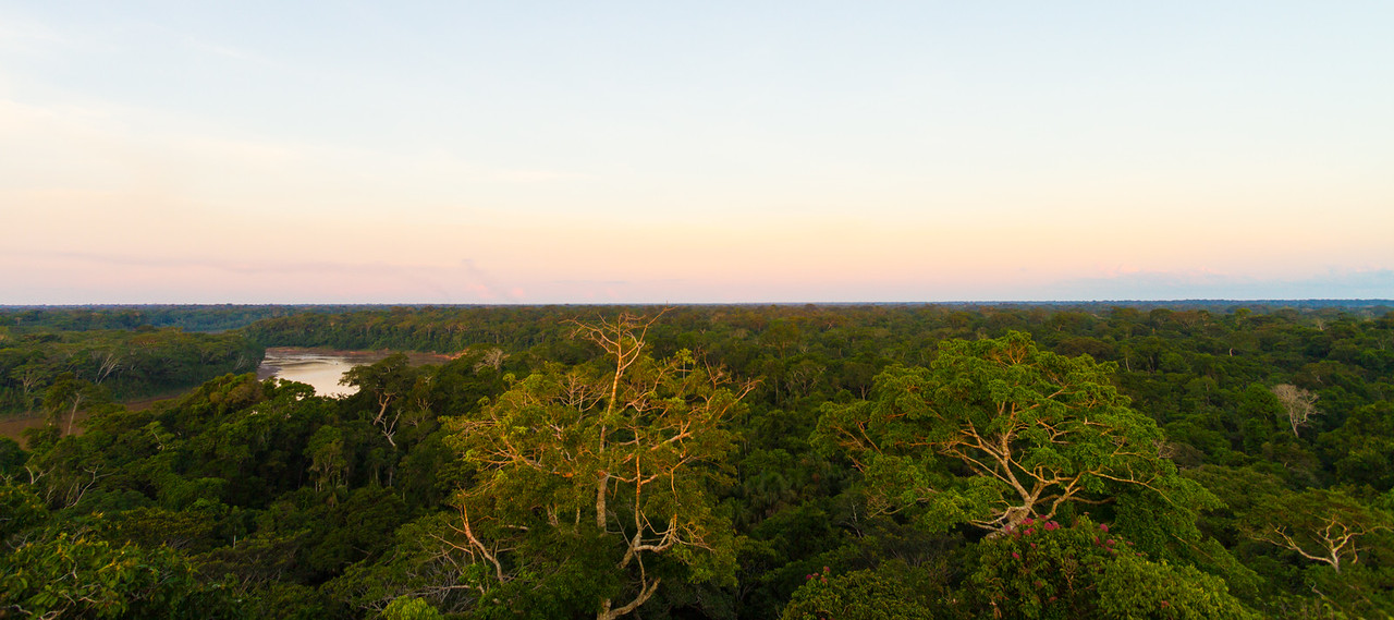 View of forest - Peru