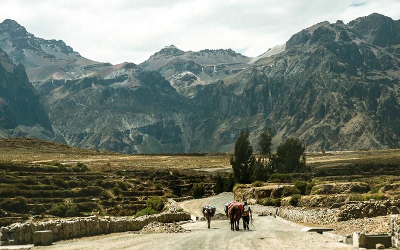 Shepherd on Mountain Road