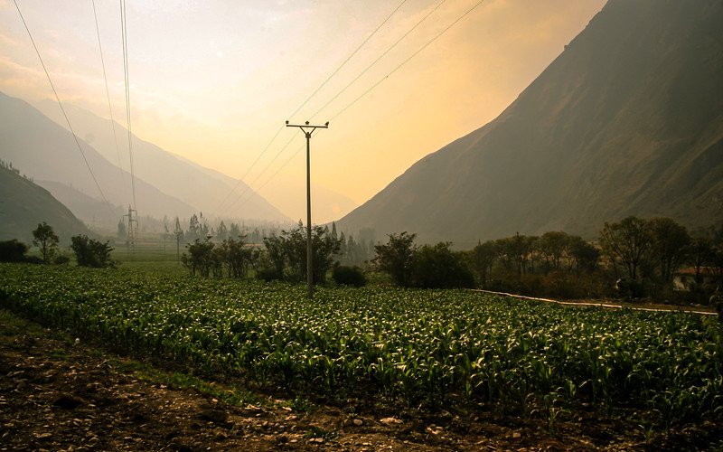 Dawn Over Corn Fields