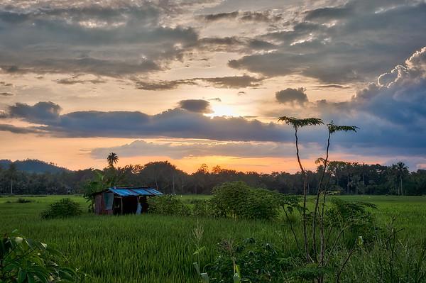 Bohol 10 - Ricefield shed