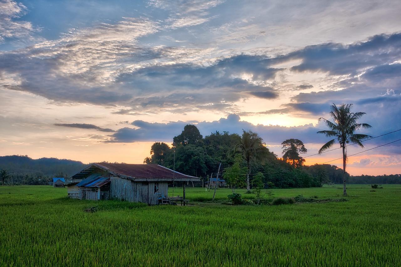 Bohol 09 - Ricefield House