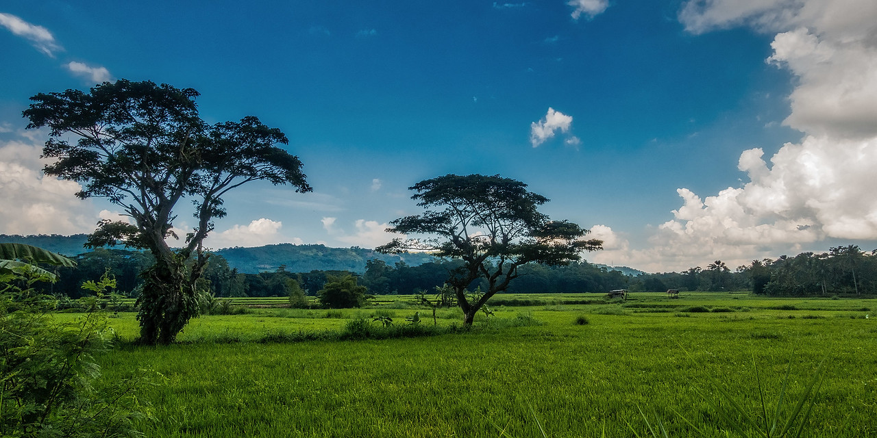 Bohol 03 - Two Trees Landscape