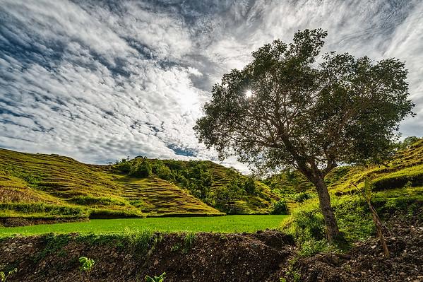 Siquijor 04-Tree Against the Sun