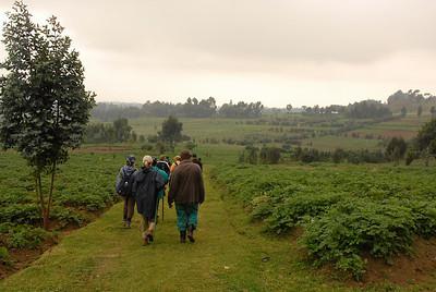 Mountain gorilla trek, Virunga Mountains region, Rwanda.
