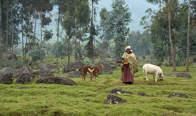 Farm on the flanks of the Virunga Mountains, Rwanda.