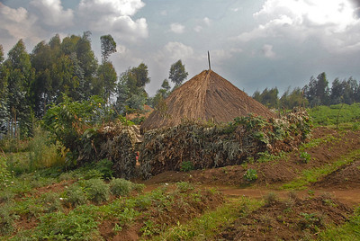Subsistence farming on the flanks of Mt. Sabinyo, Rwanda.
