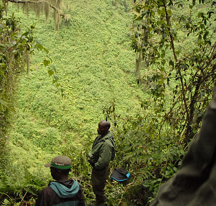 Park rangers and jungle ravine at the mountain gorilla habitat of Parc National des Volcans, Rwanda.